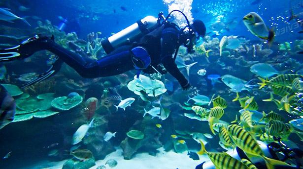 Belize Dive