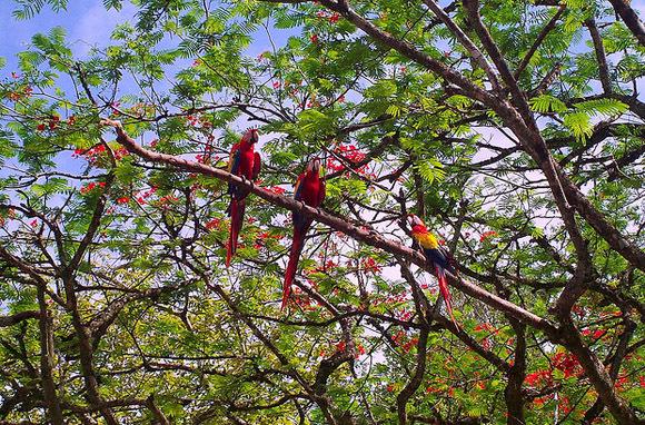 Honduras Endemic Flora and Fauna
